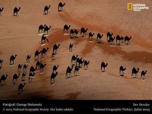 camels-shadow.jpg