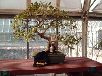 350yea-old-bonsaismall.jpg