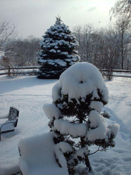 fresh-snow.jpg