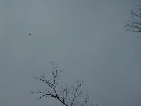 hawk-001.jpg