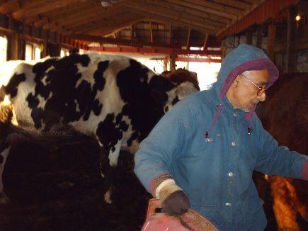 volunteer-caring-for-cows.jpg