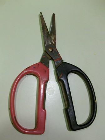 harvesting scissors
